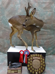 Roe Buck Winner Best in Britain 2016